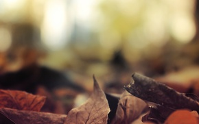 Picture autumn, leaves, foliage, forest, river, trees, landscape, nature, autumn, view, leaves, fall, foliage, fscenery