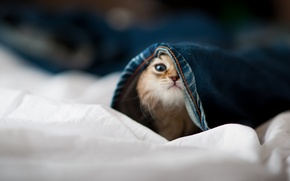 Picture face, kitty, cat, hide and seek, pants