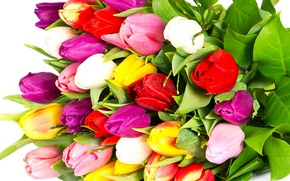 Picture flowers, flowers, beauty, red, colorful, yellow, Tulips, lilac, white, pink, petals, bouquet, yellow, bright, purple, ...