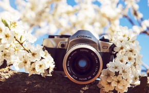 Picture flowers, camera, the camera