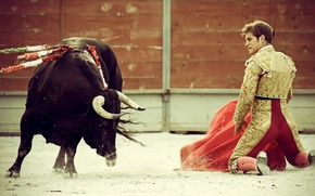 Picture Spain, bull, toreador