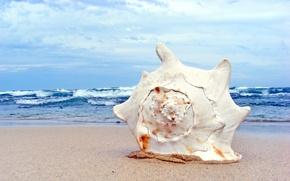 Wallpaper macro, shell, sink, shore, beach, sand, sea, wave, summer, the sky