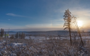 Picture the sun, snow, trees, North, the pole of cold, Oymyakon