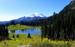 Picture forest, the sky, snow, flowers, mountains, nature, lake, spruce, slope, meadow, top