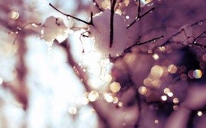 Picture the sky, the sun, drops, light, snow, trees, glare, sprig, spring, thaw, time, drops, warm ...