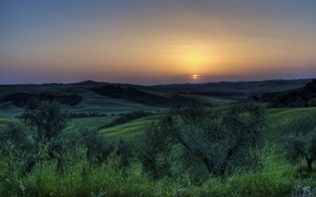 Picture the sun, trees, sunset, Italy
