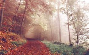 Picture forest, trees, nature, autumn, leaves, fog, woods, trail, path, foggy, fall