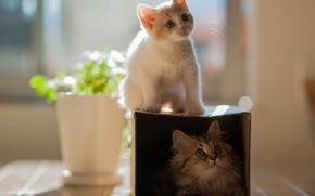Wallpaper flower, cats, kitty, box, the game, pair, pot, two, Daisy, Ben Torode, Hannah