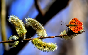 Picture the sky, nature, tree, pollen, butterfly, branch, spring, kidney, Verba