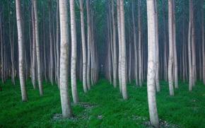 Wallpaper Trees, grass, forest