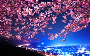 Picture Sakura, Japan, Night city, Shin Mimura, Highway, Cherry blossoms