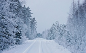 Picture winter, road, snow, trees