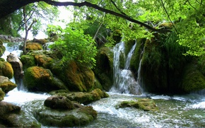 Picture greens, leaves, branches, stones, moss, Croatia, Waterfalls, Plitvice lakes