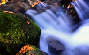 Picture leaves, water, moss, Elements