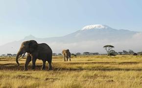 Picture animals, grass, mountains, heat, morning, Africa, elephants, Australia