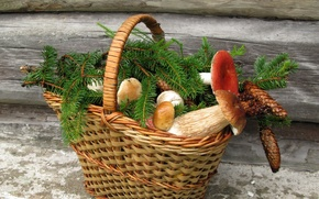 Picture mushrooms, still life, basket, bumps