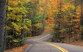 Wallpaper road, forest, leaves, trees, track, Autumn, turn, slide