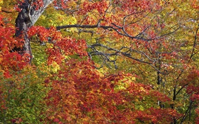 Wallpaper autumn, leaves, trees, branches
