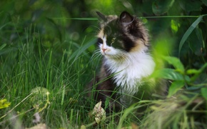 Wallpaper spotted, grass, cat