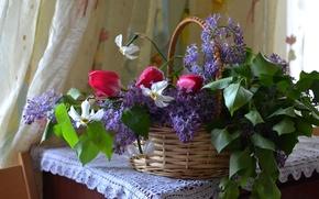 Wallpaper basket, tulips, lilac, daffodils