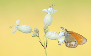 Picture white, flower, butterfly, orange, yellow background, inflorescence