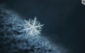 Picture winter, macro, snowflake