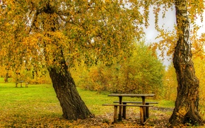 Picture autumn, leaves, trees, Park, yellow, benches, the bushes, table, benches