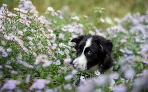 Wallpaper look, flowers, each, dog
