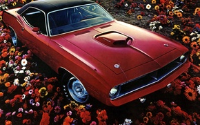 Picture field, flowers, red, 1970, Plymouth, Plymouth, Muscle Car, Hemi CUDA