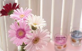 Picture flowers, pink, gerbera, gerbera