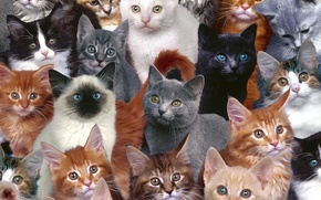 Picture cats, small, red, seamy, mitici, grey