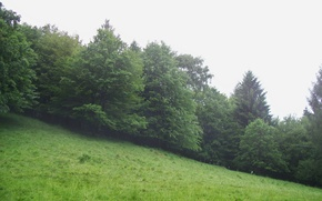 Picture greens, forest, mountains, fog, tree, ate, cloud, slope
