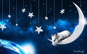 Picture space, the moon, pet, the sky., chinchilla, chinchilla