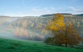 Picture autumn, forest, the sky, grass, mountains, fog, morning, slope