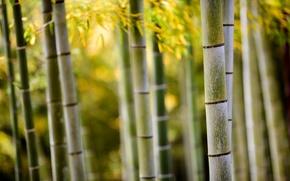 Picture macro, nature, trunks, foliage, bamboo, bokeh