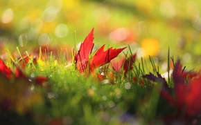Picture autumn, grass, leaves, macro, nature, bokeh