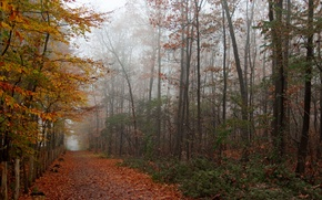 Picture autumn, foliage, forest.road
