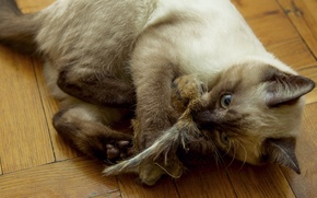 Picture cat, mouse, flooring, floor