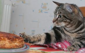 Picture cat, cat, pie