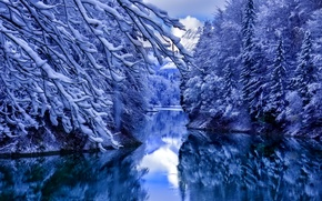 Picture water, snow, reflection, trees, Winter