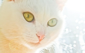 Picture cat, light, kitty