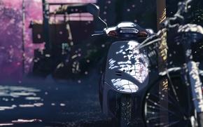 Picture Sakura, 5 centimeters per second, Makoto Xingkai, motorcycle
