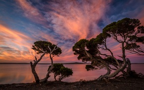 Picture trees, sunset, shore, the evening