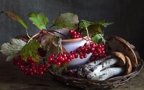 Picture berries, autumn, mushrooms, boletus, Kalina