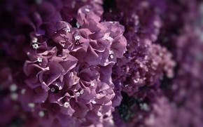 Picture focus, 2560x1440, macro, paint, flowers, petals, flowers, macro, nature, colors, focus, petals, nature
