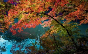 Picture reflection, foliage, Trees