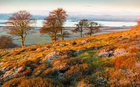 Picture frost, autumn, grass, trees, landscape, mountains, lake, hills