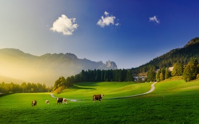Picture greens, forest, the sky, clouds, light, mountains, blue, cow, cows, meadows, Alps