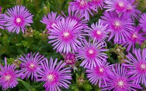 Picture greens, grass, Wallpaper, bouquet, petals, flowerbed