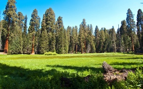 Picture Park, nature, meadow, sequoia, photo, grass, CA, forest, USA
